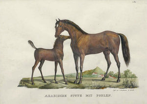 Old print of an Arabian mare and foal