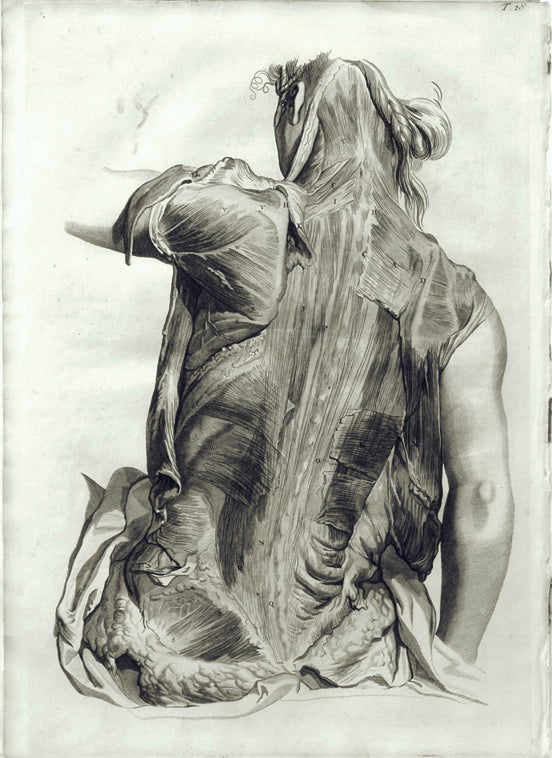 Anatomical Illustration (T. 28): William Cowper 1750