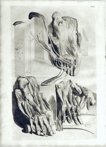Anatomical Illustration (T. 86): William Cowper 1750