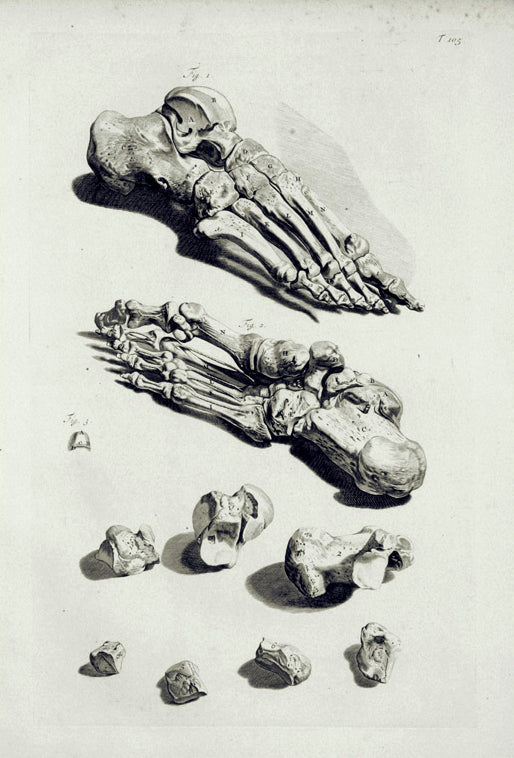 Anatomical Illustration (T. 105): William Cowper 1750