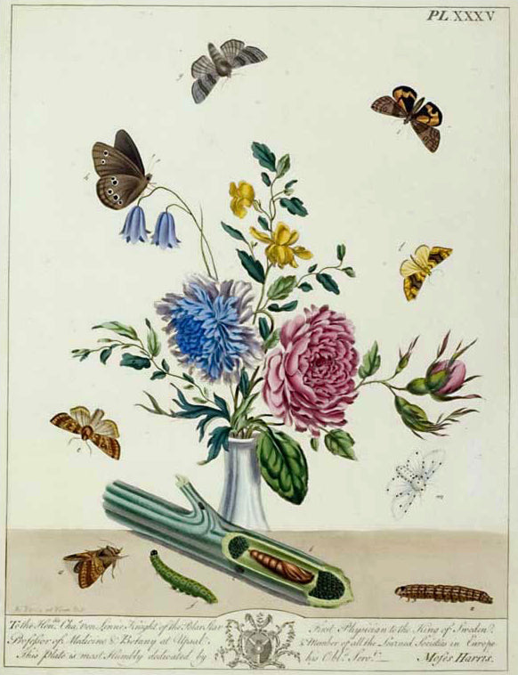 Butterflies and Moths: Moses Harris 1840