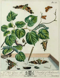 Butterflies and Moths, XX: Moses Harris 1840