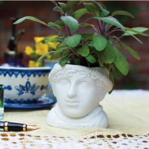 Fertile Minds: Jane Austen Planter