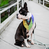 Inclusive Dog Bandana