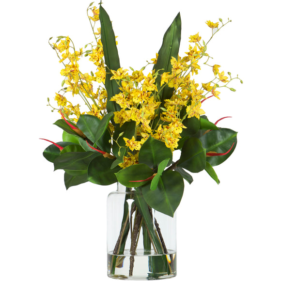 Oncidium - Large