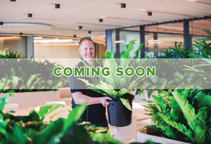 Servicing your plants - Coming Soon
