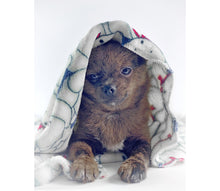 Laden Sie das Bild in den Galerie-Viewer, Bully & Teddy Vintage Blanket - weiche Hundedecke