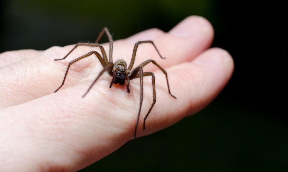 Tips To Recognise A Spider Bite