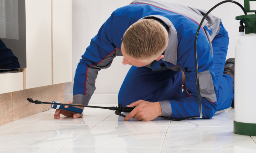 Pest Control Tips To Keep The Roaches Away