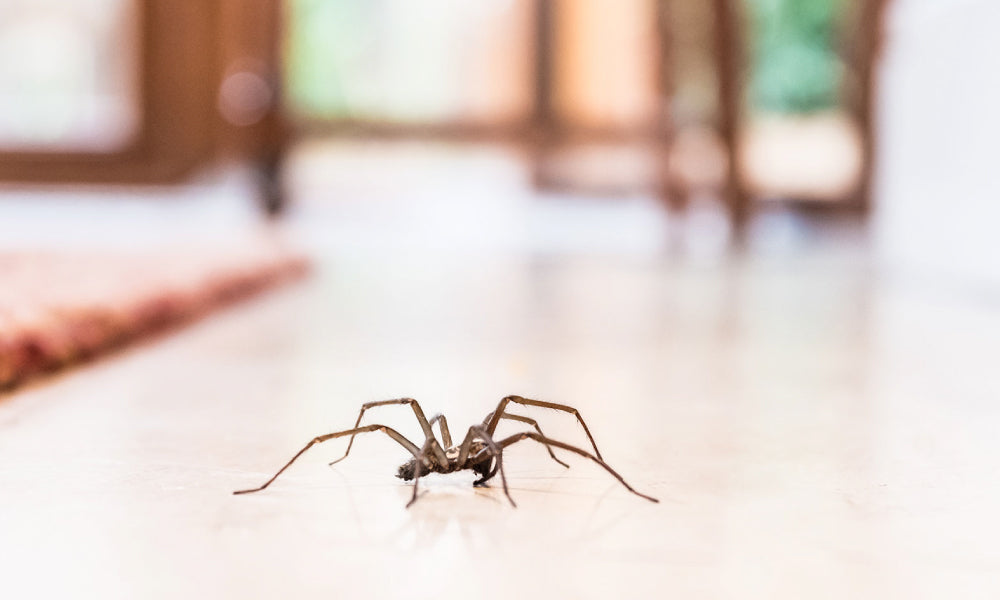 Spiders From Your Place