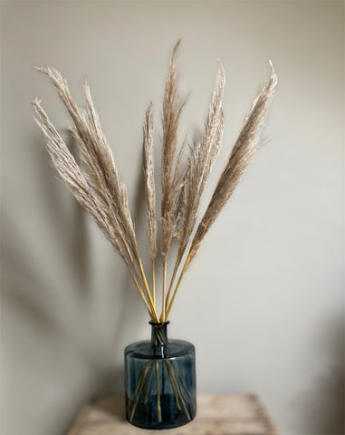 Dried Pampas Grass (10 stems)