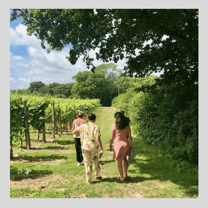 Vineyard reopens to visitors