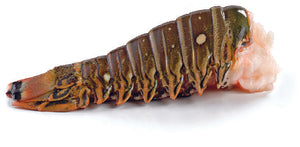 Warm Water Lobster Tails - 10oz