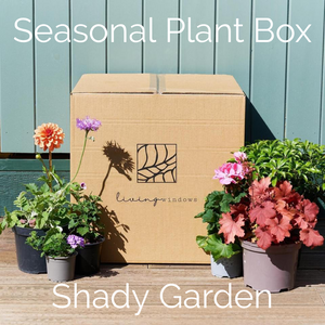 The Spring Seasonal Plant Box
