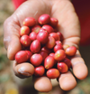 Timor Leste Raimutin Washed <br>Green Coffee Beans