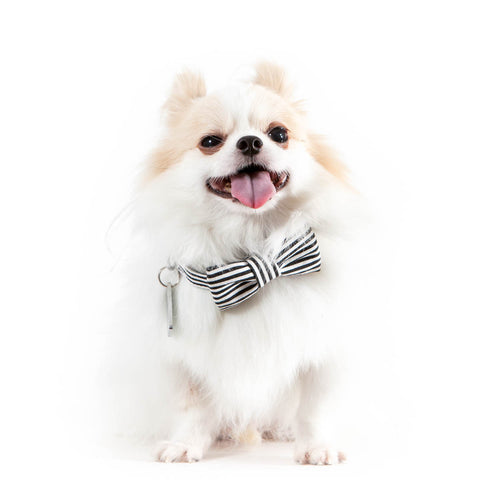 Clever You Dog Bow-tie Collar