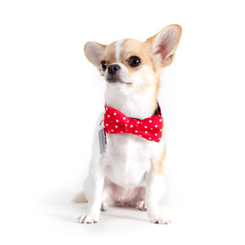 Red Polka Bow-tie Collar