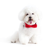Merry Red Bow-tie Collar