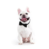 Man Of Style Bow-tie Collar