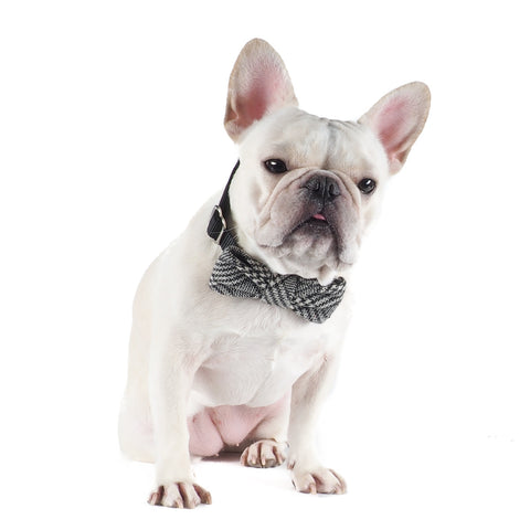 Glen Check Bow-tie Collar