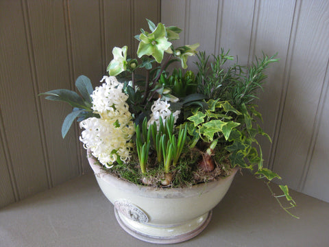 Planter of white bulbs and plants