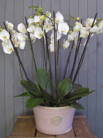 Classic deep bowl of orchids.