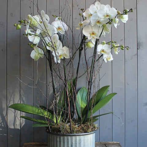 Cupcake Orchid Planter