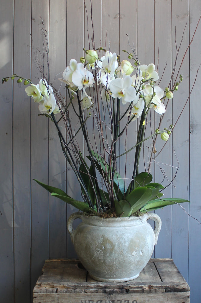 Grecian urn with orchids.