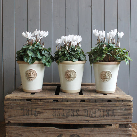 Pair or Trio of Pots.