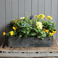 Letter box planter of mixed seasonal bulbs and plants
