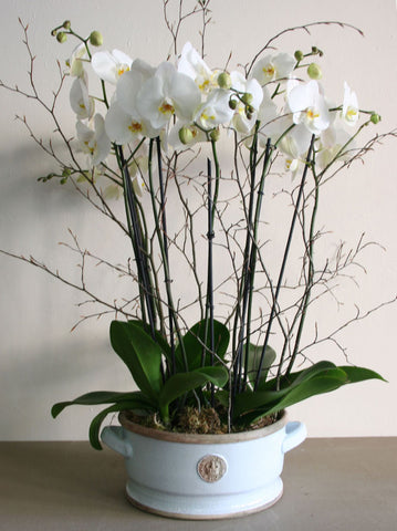 Orchid Planter from Kew Botanics range