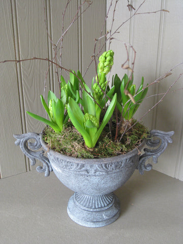 Urn planted with hyacinths