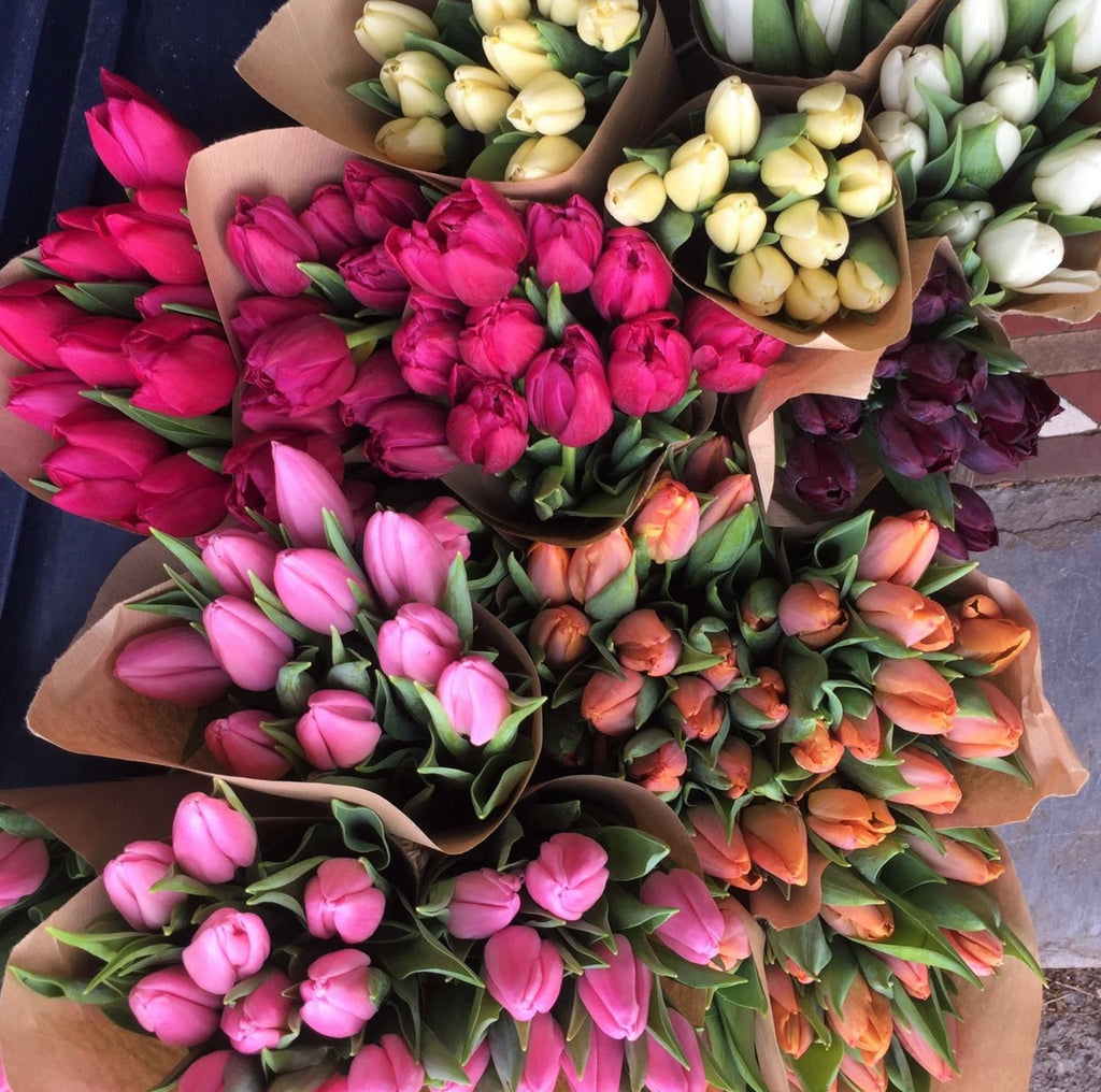 Choose your colour tulips