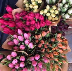 Tulip bunches.