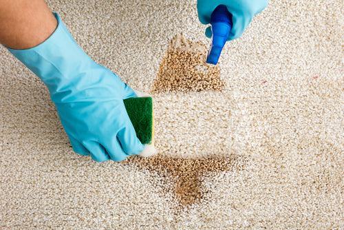 How To Remove Carpet Stains In Commercial Settings removing carpet stain with gloves