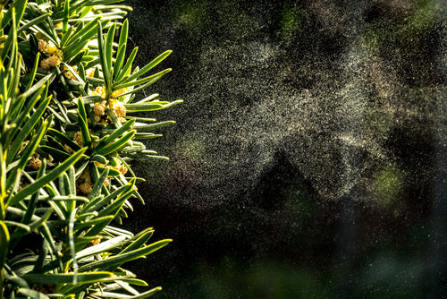 Seasonal Challenges for Industrial Cleaning pollen coming off of tree