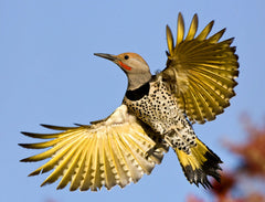 Gilded Flicker by Bruce Taubert