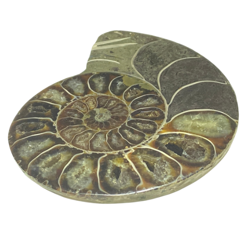 Ammonite Madagasgar