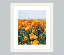Load image into Gallery viewer, California Gold #1
