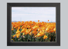 Load image into Gallery viewer, California Gold #3