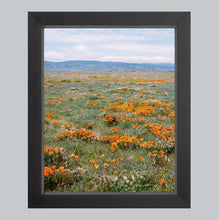 Load image into Gallery viewer, California Gold #4