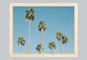 Palms of Palm Springs #1