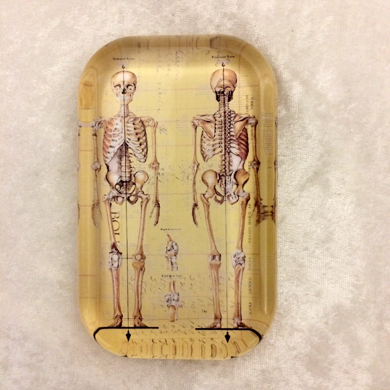 Skeleton Chart Paperweight
