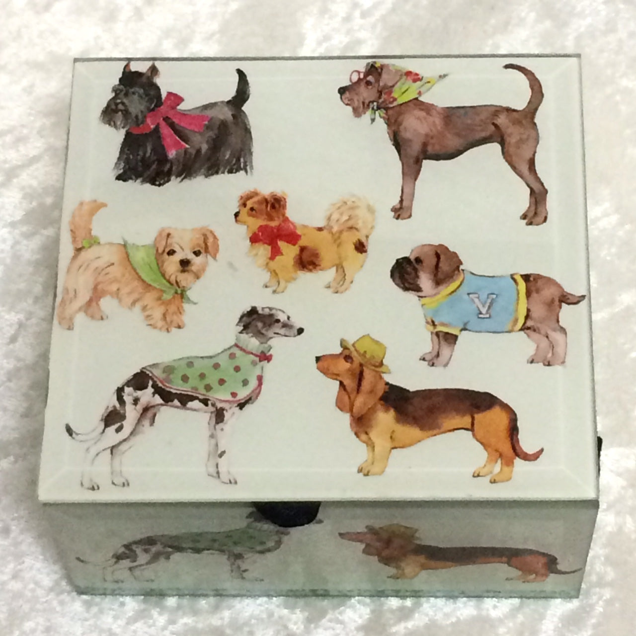 Show Dogs Box