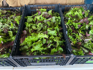 4E Farm Fresh Salad--Mesclun