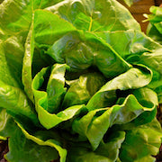 Ann Maries Farm Stand --Romaine / head