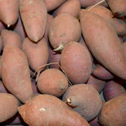 Sweet Potatoes / lb