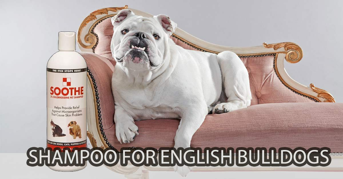Shampoo for English Bulldogs | The Best Dog Shampoo