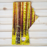 Manitoba Province <br>Forest <br>Photo on Birch Wood Panel <br>