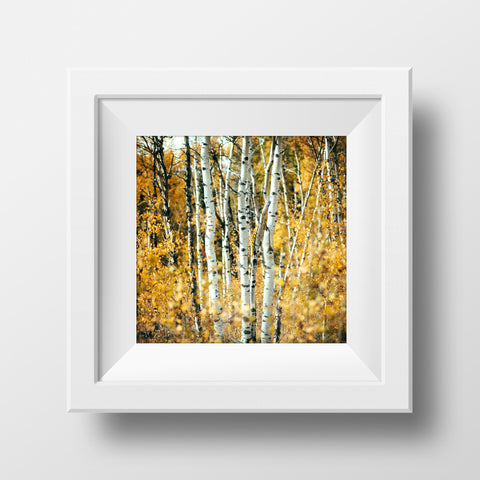 CLEARANCE Print<br>Aspens in Alberta Autumn<br>Various Finishes + Sizes
